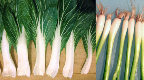 Green Onion and Bok Choy